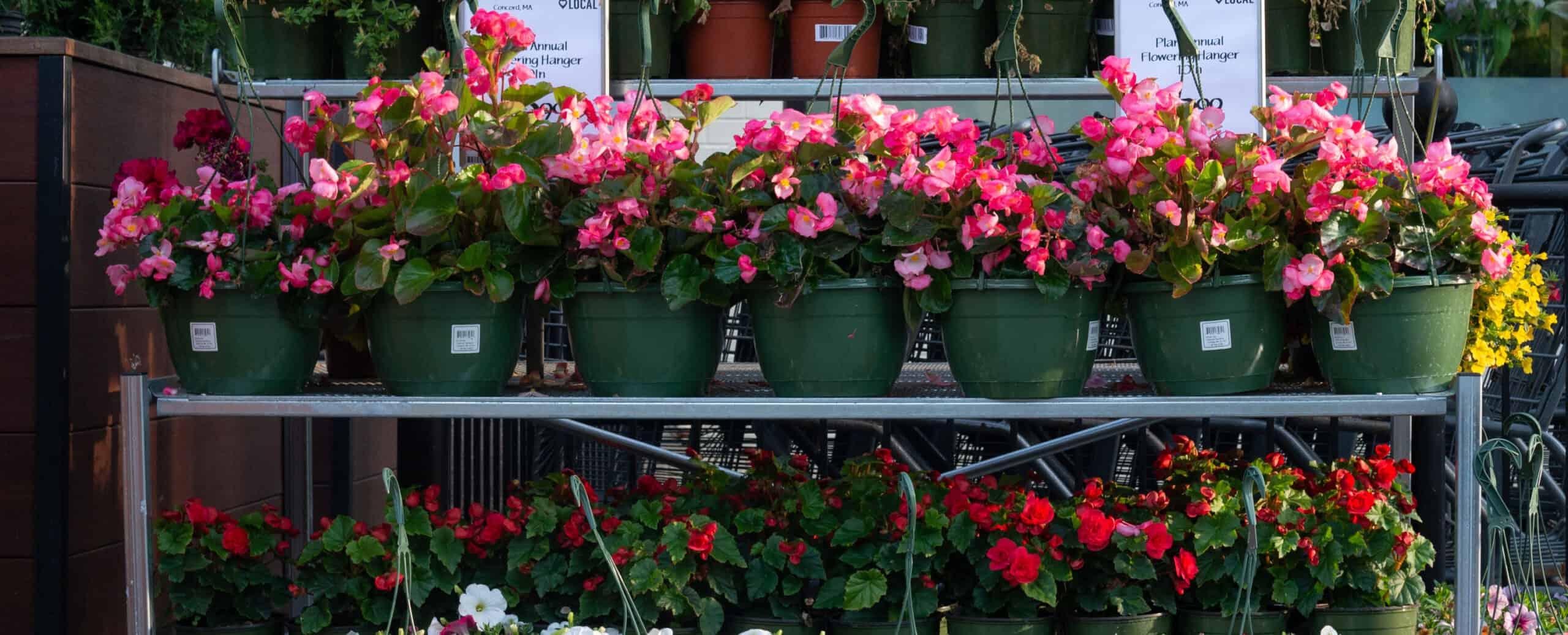 Flowers in a row Brookline